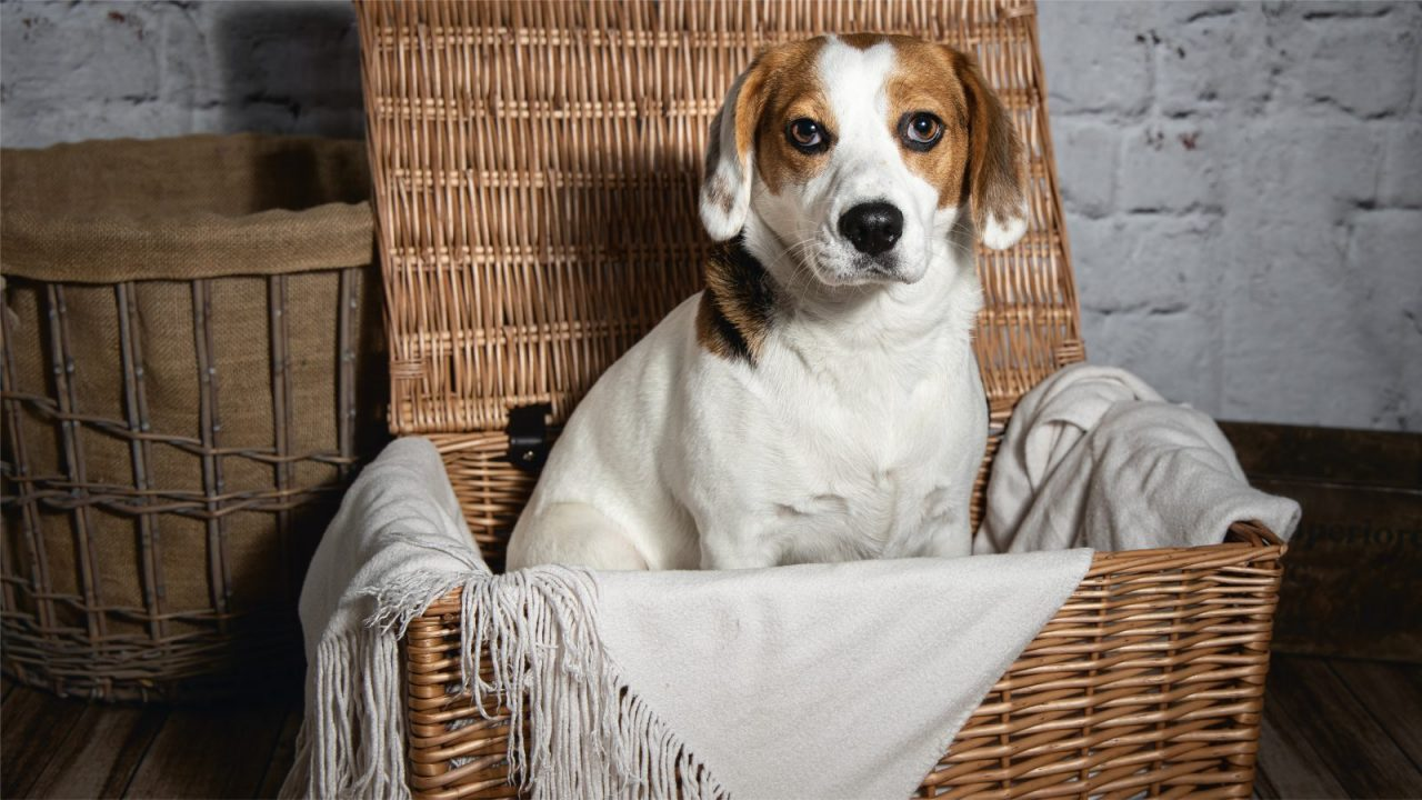 Hampers For Dogs