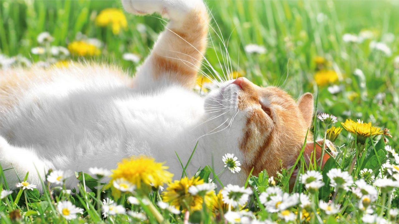 Eco Cats