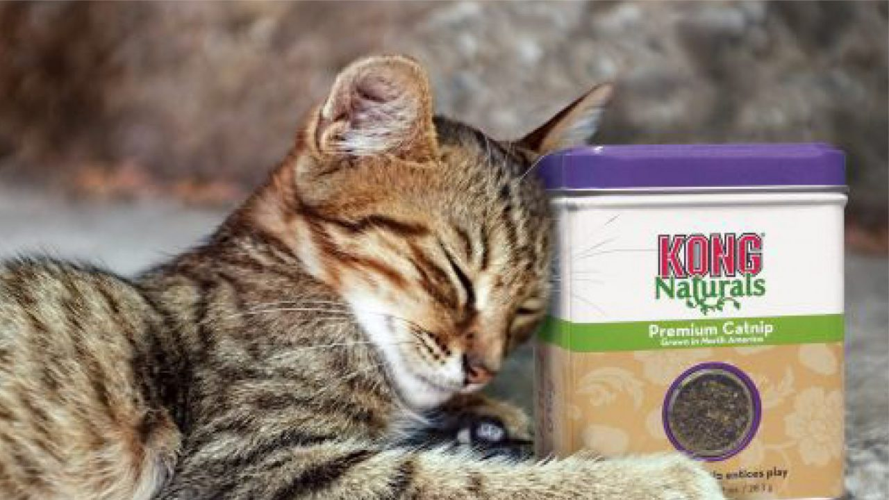 KONG Cat